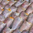 Drying snakeskin gourami fishes — Stock Photo #31979705