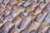 Drying snakeskin gourami fishes — Stock Photo