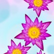 Purple water lily on colorful background — Stockfoto