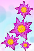 Purple water lily on colorful background — Stock Photo