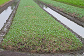 Allevamento vegetale — Foto Stock