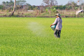Farmer is sowing fertilizer in paddy field — Foto de Stock