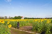 Photographer in sunflower farm — Stock Photo