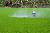 Farmer is spraying insecticide — Stock Photo