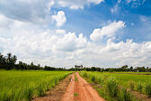Gravel road in rice farm — Stock Photo
