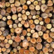 Cross section of pile log — Stock Photo