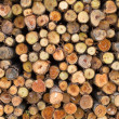 Cross section of pile log — Stock Photo #36151459