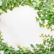Green creeper plant on white wall arrange as circular frame — Stock Photo