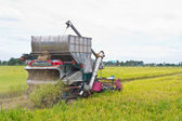 Combine harvesting rice in paddy — ストック写真