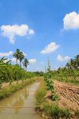 Gourd farm with beautiful sky — Stockfoto