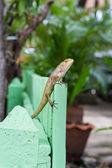 Brown Lizard or asian lizard on green fence — Стоковое фото