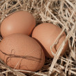 Fresh Eggs — Foto Stock