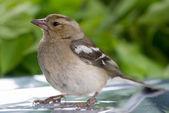 Uccello — Foto Stock