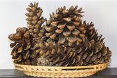 Basket of cones — Stock Photo