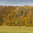 Autumn Landscape Panorama With Horses — Stock Photo