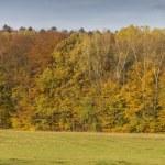 Autumn Landscape Panorama With Horses — Stock Photo #33926825