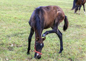 Young Horse Tries to Scratch its Ear with its Hoof — Stok fotoğraf