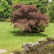 Fragment of a Japanese garden - in the foreground a stone path a — Stock Photo