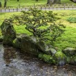 Fragment of a Japanese garden with a bonsai tree growing on a ba — Stock fotografie