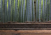 Straw Fence and Bamboo Forest near Kyoto. — Foto Stock