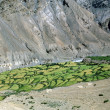 Traditional himalayan terraced fields in Spiti valley, Himachal — Stock Photo