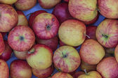 Jonagold variety apples lying in a chest at a fruit and vegetabl — Stock Photo