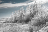 Generic winter landscape — Stockfoto