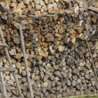 Stock Photo: Logs of Wood of Different Kinds, Sizes and Shapes