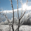Winter landscape with sun shining through ice-covered branches — Stock Photo