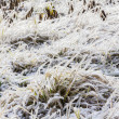 Frozen grass in winter — Stock Photo
