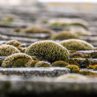 Bunches of colorful moss on the tiled roof — Stock Photo #41579953