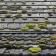 Tiled Country Roof Covered with Moss — Stock Photo #41579975