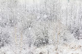 Oil painting stylized photo of twigs and branches covered with s — Stock Photo