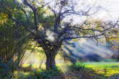Oil painting stylized photo of shiny tree — Stock Photo