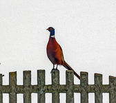 Oil painting stylized photo of pheasant standing on stone fence — Photo