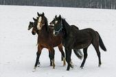 картина маслом стилизованные фото лошадей, прогулки по снегу — Стоковое фото