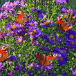 Oil painting stylized photo of group of butterflies — Stock Photo