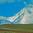 Asian landscape - steppe, cattle silhouettes and pamir mountain — Stock Photo