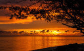 Sunrise in tropical sea with tree and clouds — Stock Photo