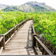 Wood path way among the Mangrove forest, Thailand — Stock Photo