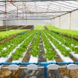 Organic hydroponic vegetable farm — Stock Photo #32794469