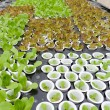 Organic hydroponic vegetable farm — Stock Photo #32795143