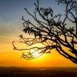 Silhouette of tree branch — Foto de Stock