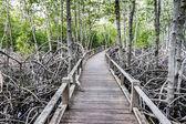 Caminho de madeira do caminho entre a floresta de mangue, tailândia — Foto Stock