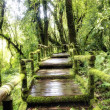 Bridge in to the jungle  — Stock Photo