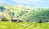 Green Terraced Rice Field in Chiangmai, Thailand — Stock Photo