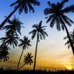 Sunset on the beach of Caribbean sea — Stock Photo #35706685