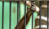 Monkey Cage — Stock Photo