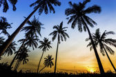 Sunset on the beach of Caribbean sea — Stock Photo