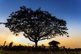 Hut and big tree in the terrace rice field over sunset — Stock Photo